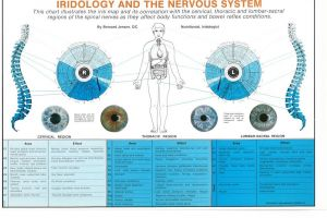 Iridology and the Nervous System